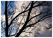 tree-and-clouds001-thm.jpg