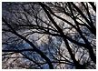 tree-and-clouds002-thm.jpg