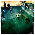 an afternoon at the races
