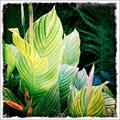 some big stripy leaves