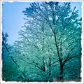 more wintery trees
