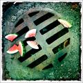 watermellon on sewer